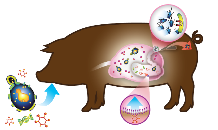 Healthy clipart healthy immune system, Healthy healthy.