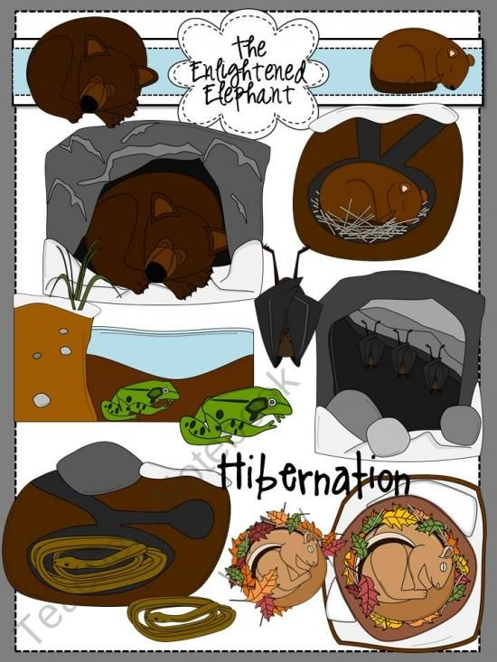 Hibernation Clip Art product from The.