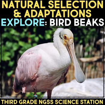 Explore Bird Beak Adaptations.