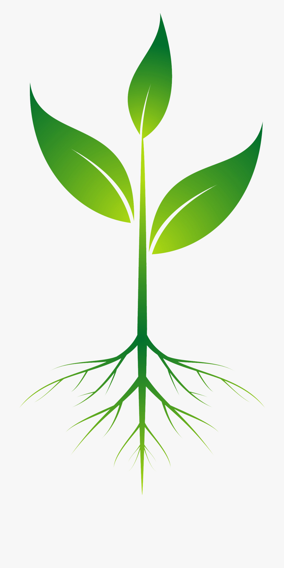 Plant with roots clipart clipart images gallery for free.
