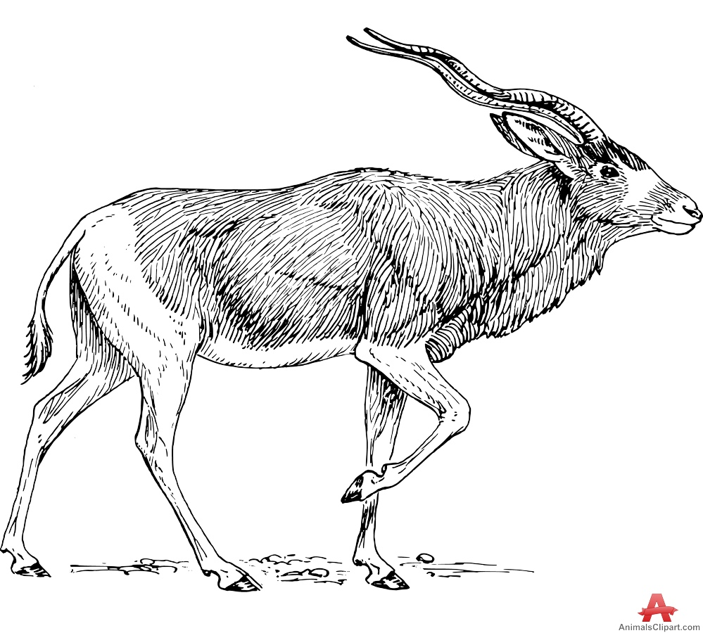 Clipart of Addax Antelope.