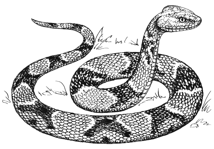 Free Snake Clipart, 2 pages of Public Domain Clip Art.