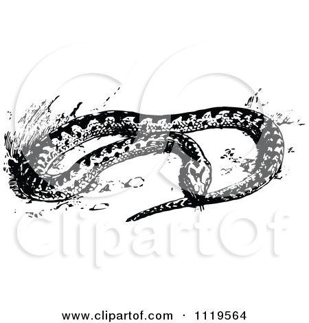 Clipart Of A Retro Vintage Black And White Adder Snake.