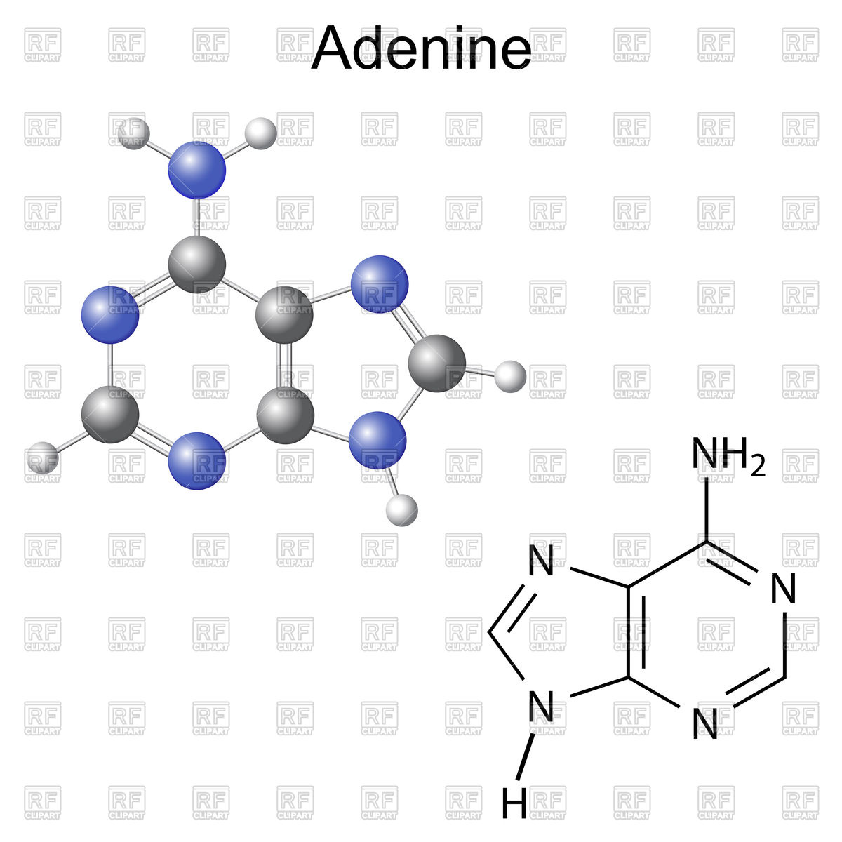Chemical structural formula and model of adenine.
