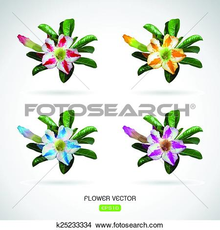 Clipart of Vector image of adenium flower on white background.