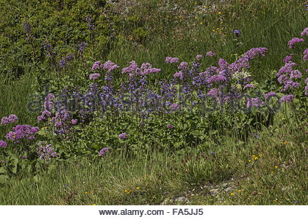 Alpines Stock Photos & Alpines Stock Images.