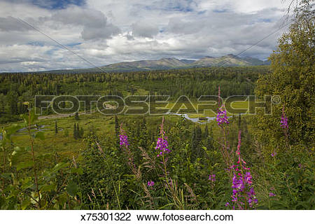 Stock Photo of Meadow adjacent to Petersville Road, AK x75301322.