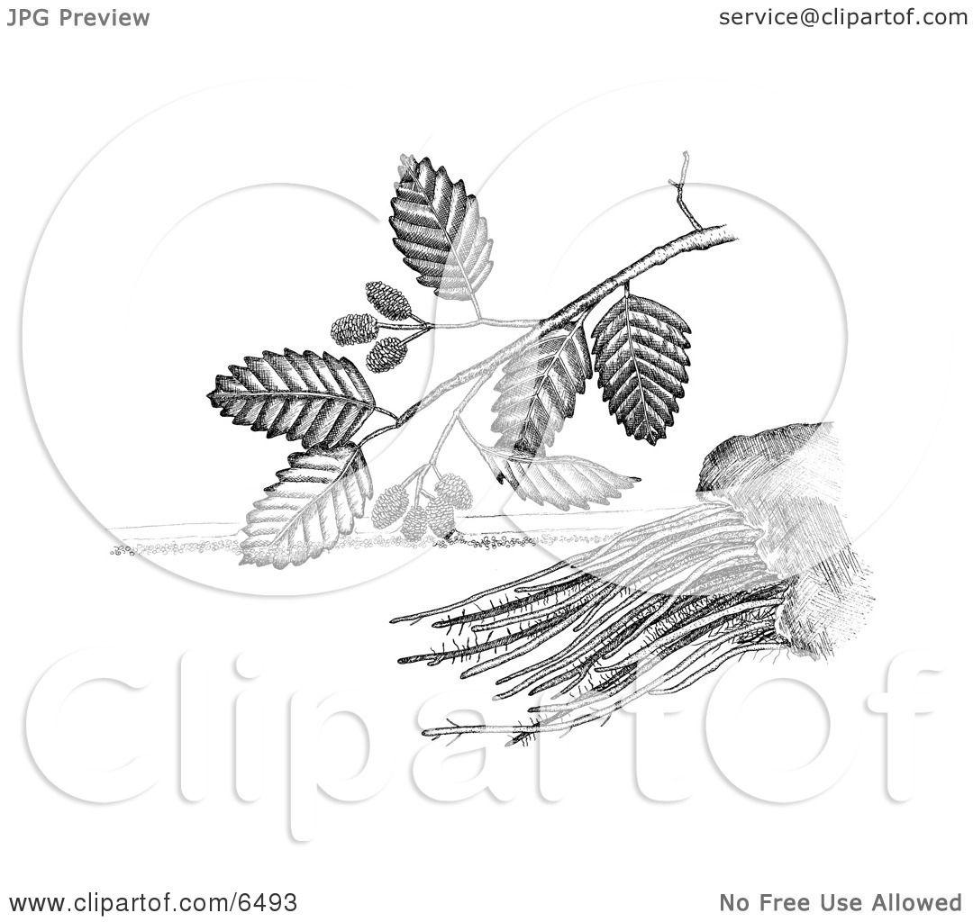 Adler Sadleria Plant Clipart by JVPD #6493.
