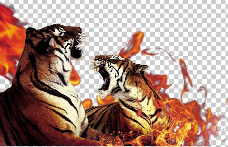 Tiger Flame PNG, Clipart, Adobe Illustrator, Big Cats.