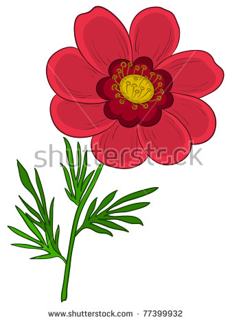 Vector Flower Adonis Outline Black Contours Stock Vector 77871148.