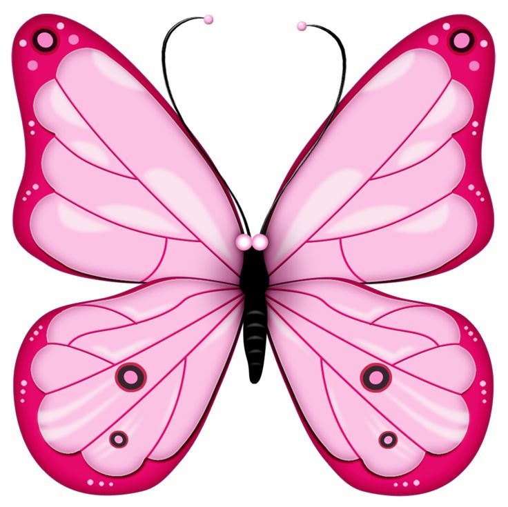 The meaning of the dream in which you saw «Butterfly».