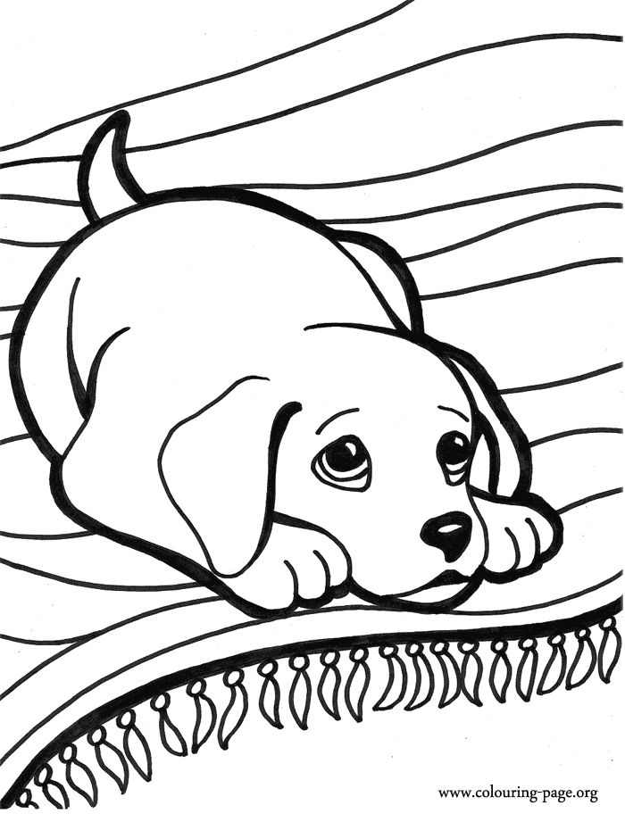 adorable animals clipart coloring pages difficult to color - Clipground