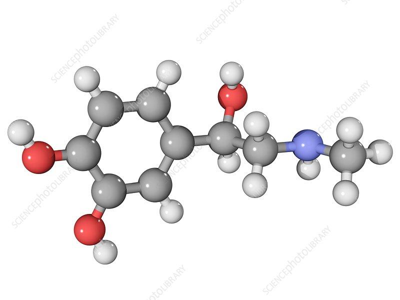 Adrenaline hormone molecule.