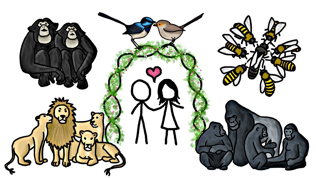 Adult animals produce offspring clipart clipart images.