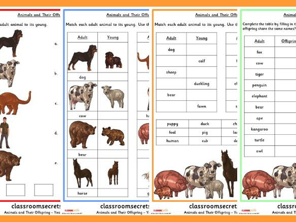 Year 2 Animals and their Offspring Science Resource.