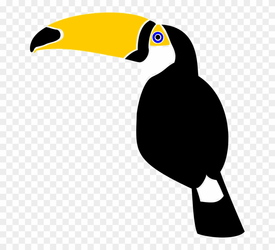 Toucan Bird Jungle Rainforest Feather Nature.