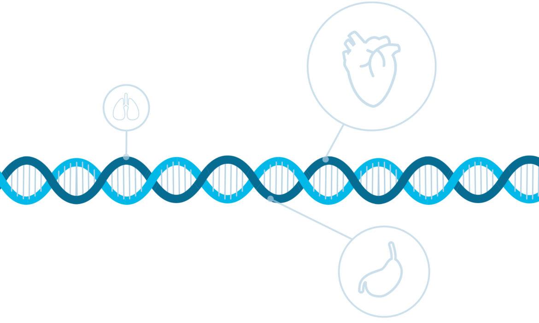 Decoding Genetics: How genetic testing influence the future.