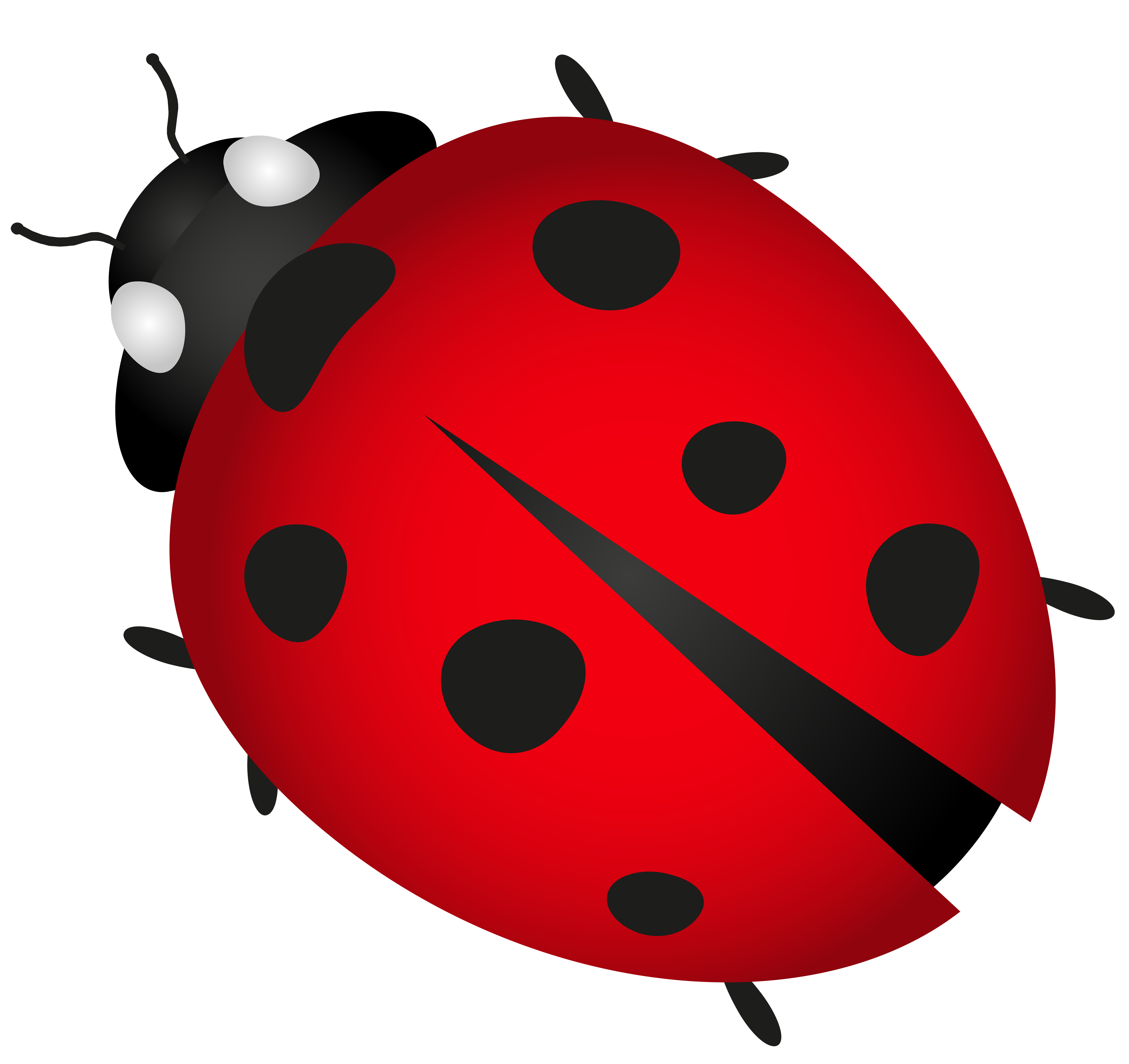 262 Lady Bug free clipart.