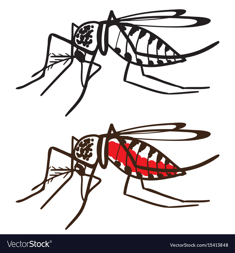 Insect mosquito aedes aegypti.