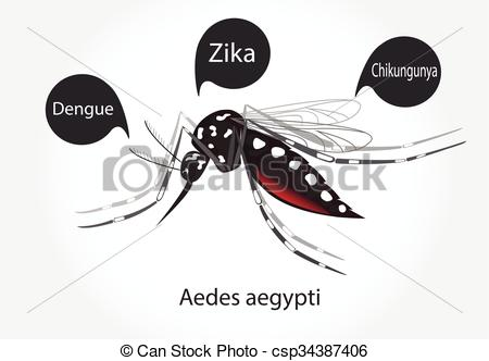 Aedes Illustrations and Clipart. 460 Aedes royalty free.