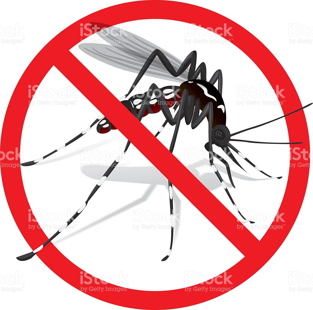 Aedes clipart.