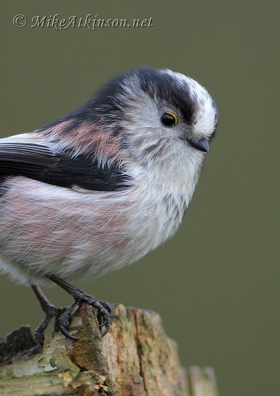 1000+ images about Bird Song.