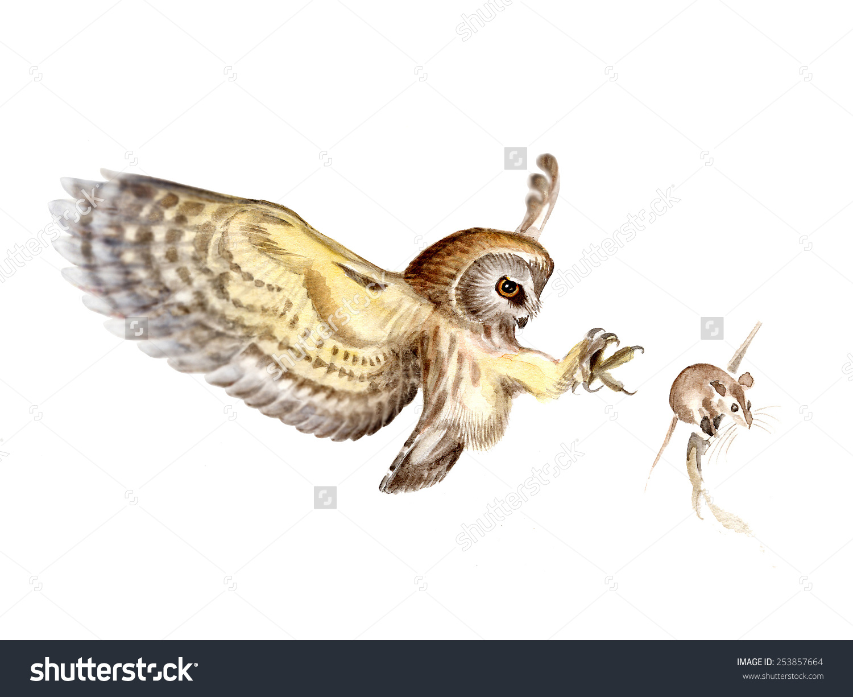Northern Sawwhet Owl Aegolius Acadicus Owl Stock Illustration.