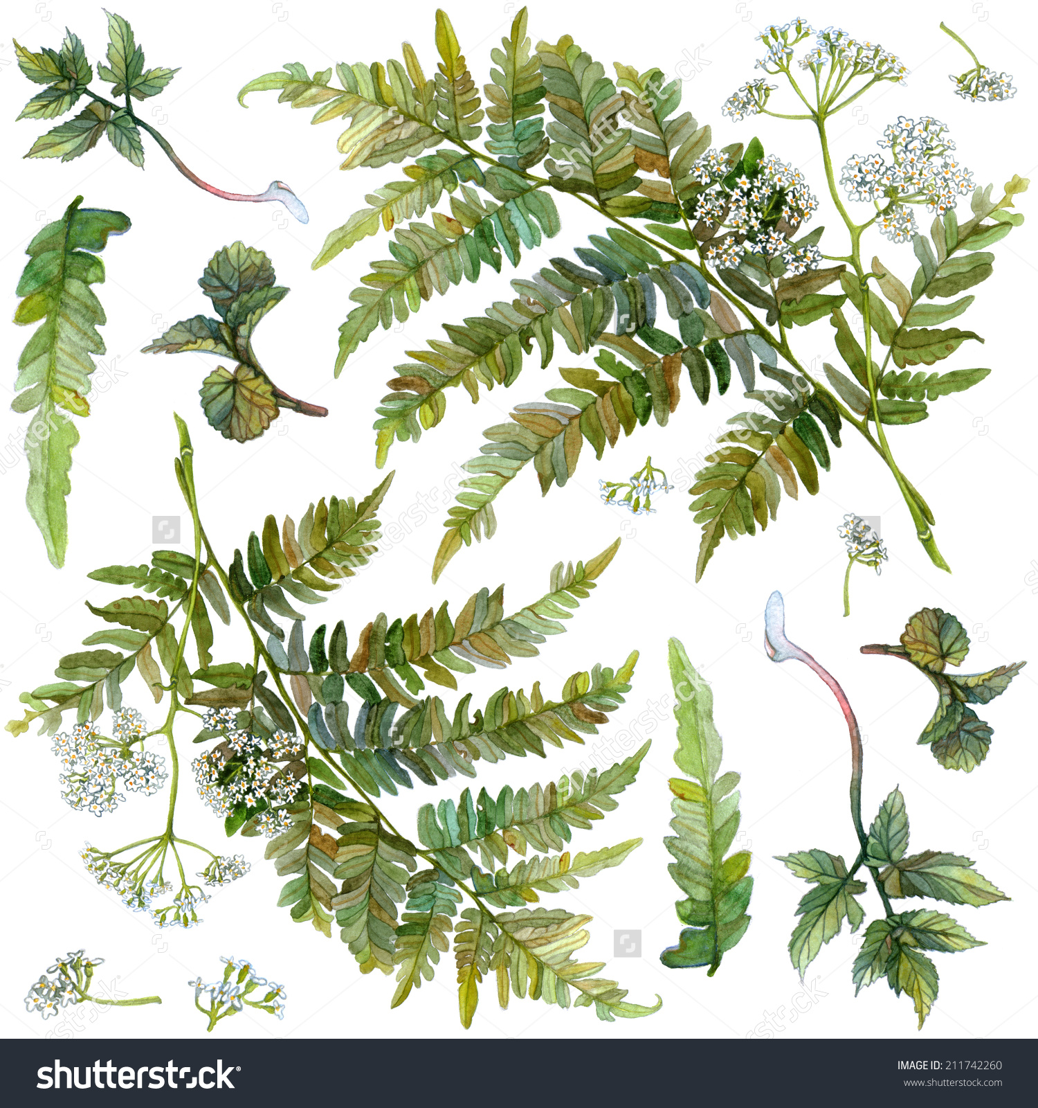 Watercolor Set Forest Herbs Flowers Fern Stock Illustration.