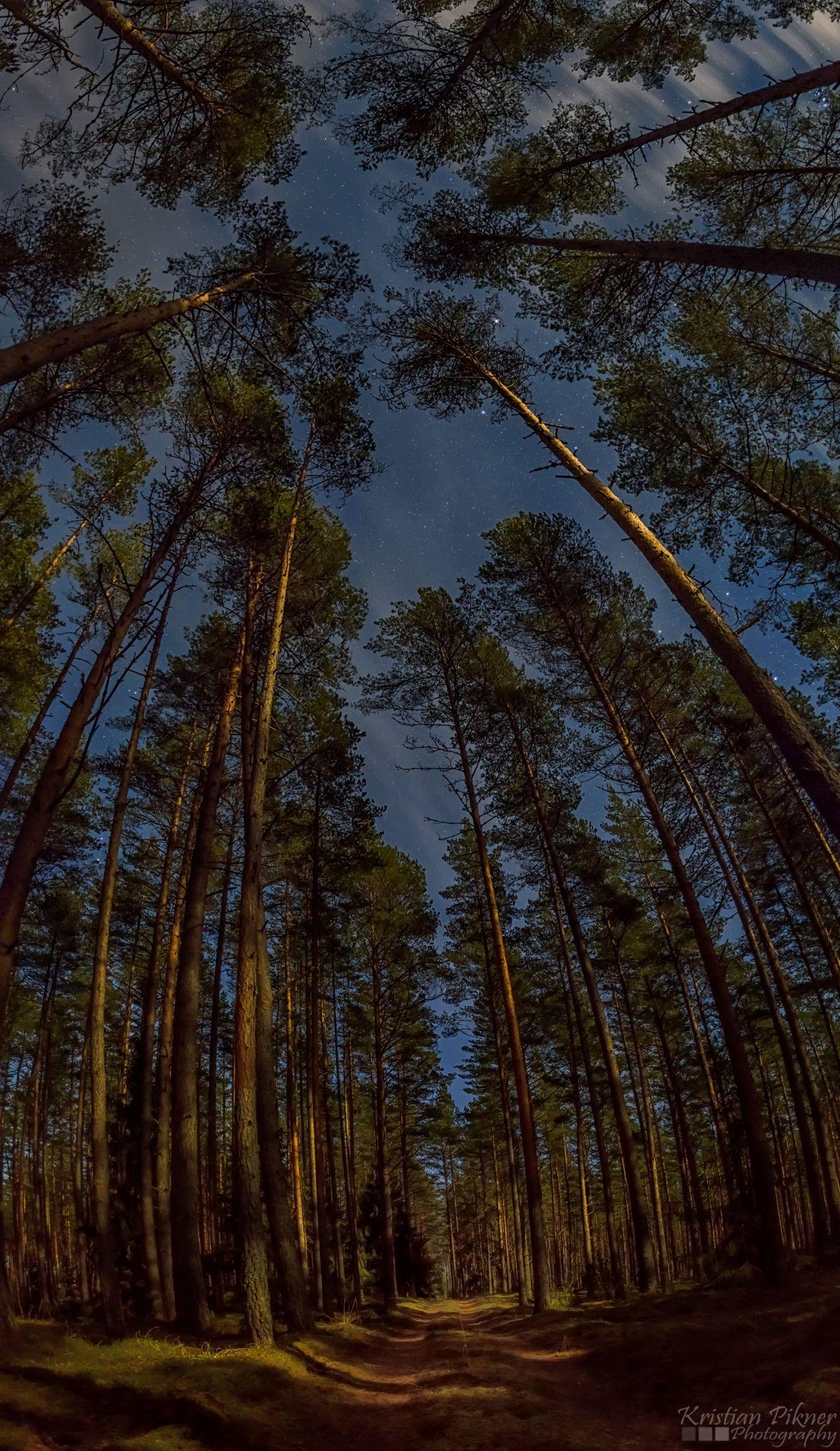 Moonlight vertical panorama in forest. Estonia 11.12.2016.