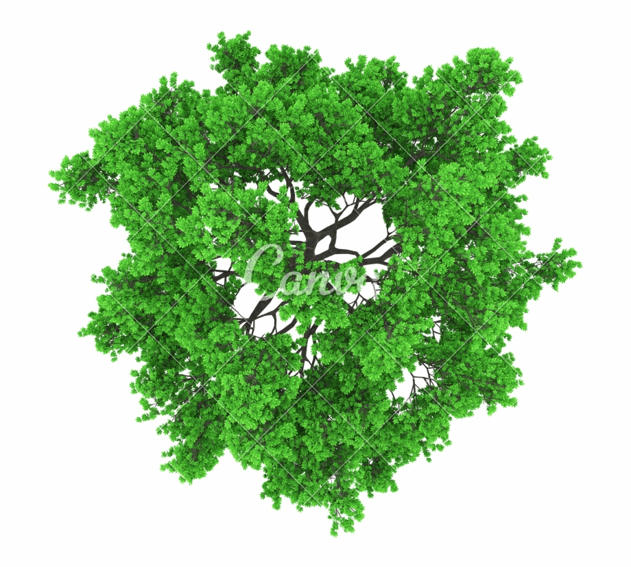 Top View Trees Png.