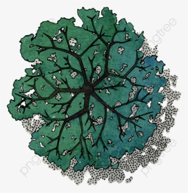 Trees Top View PNG Images, Free Transparent Trees Top View.