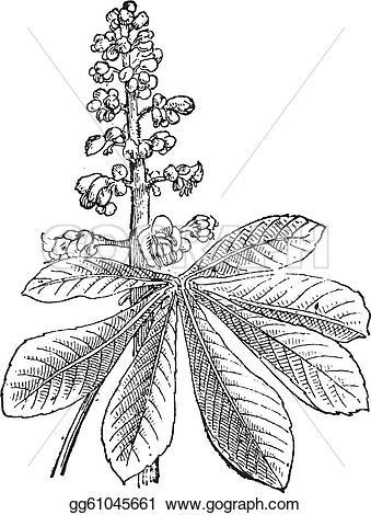 Vector Illustration.