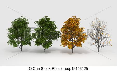 Clip Art of Aesculus hippocastanum four seasons.
