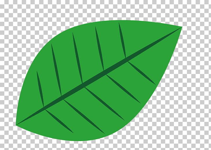 Leaf European beech American beech Aesculus Lindens, Leaf.