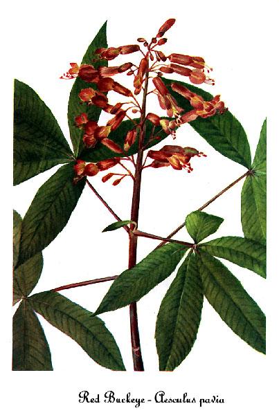 All Medicinal Plant Files by Genus.
