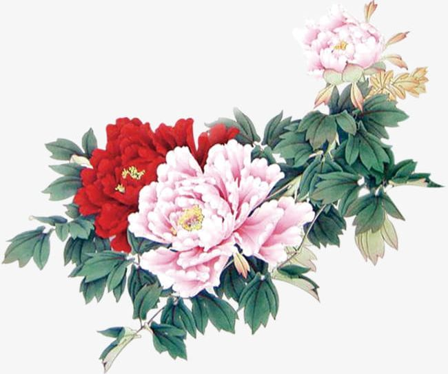 Minimalist Aesthetic Flowers PNG, Clipart, Aesthetic Clipart.
