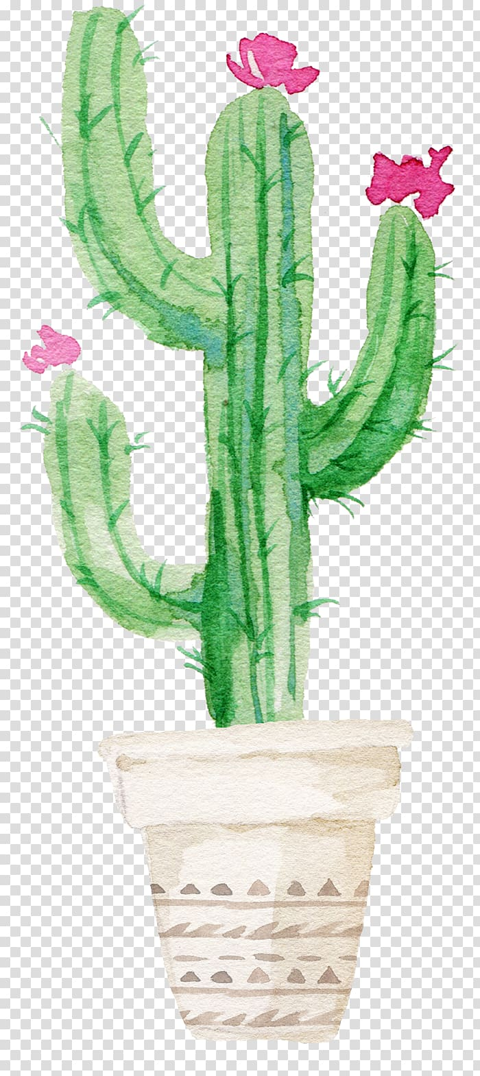 Cacti and Succulents Cacti & Succulents Cactus Watercolor.