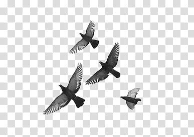 AESTHETIC GRUNGE, four black birds illustration transparent.