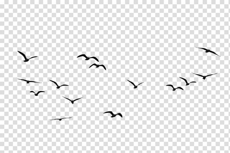 Flying black birds illustration, Bird Flock , Birds.