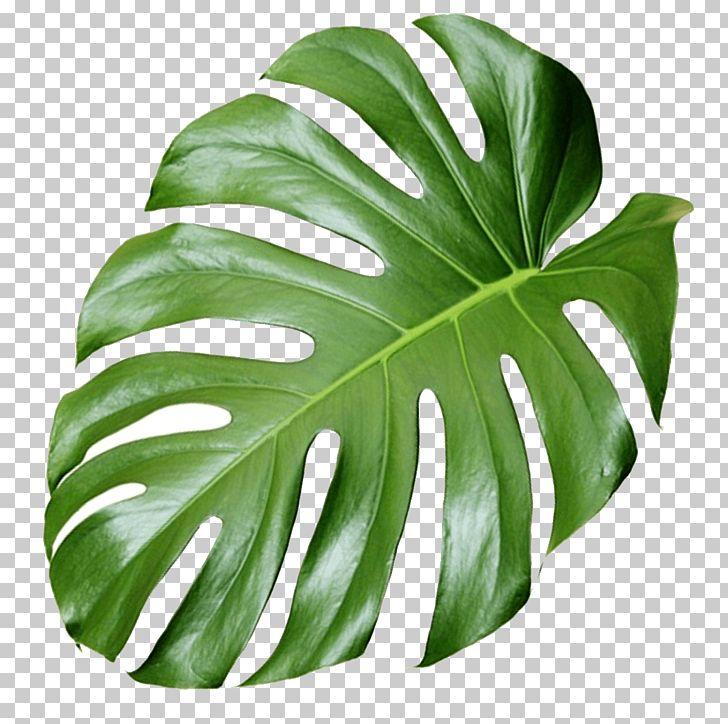 Plant Aesthetics PNG, Clipart, Aesthetics, Cactaceae.