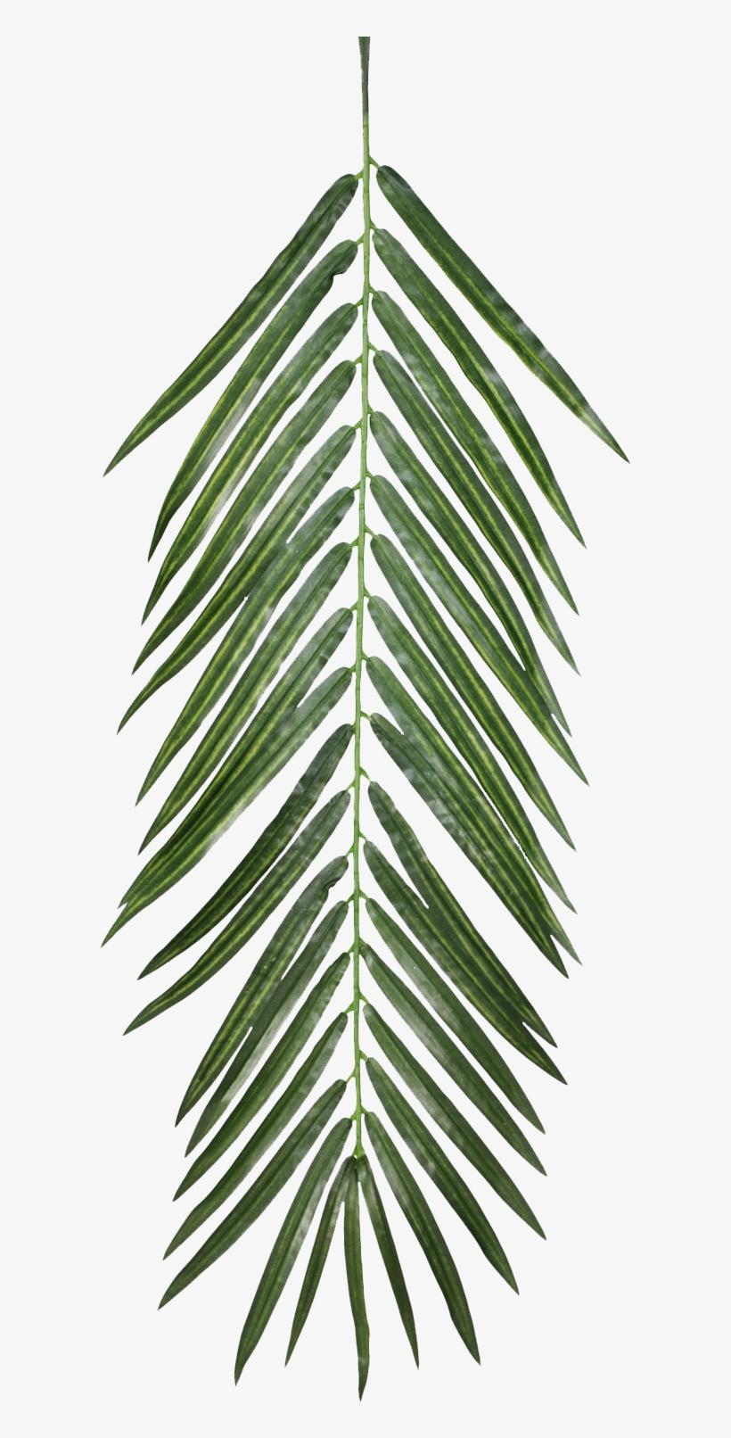 Palm Leaves, Qe >.
