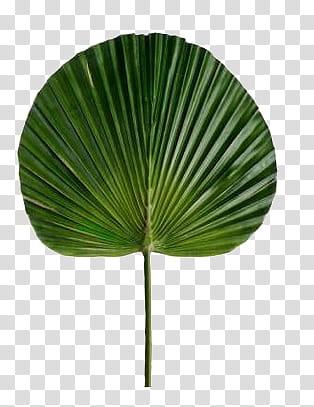 AESTHETIC GRUNGE, green palm leaf transparent background PNG.