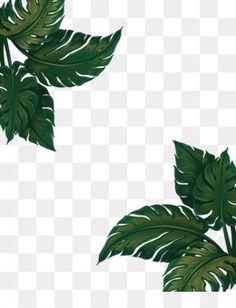 171 Best Leaves PNG & Leaves Transparent images.
