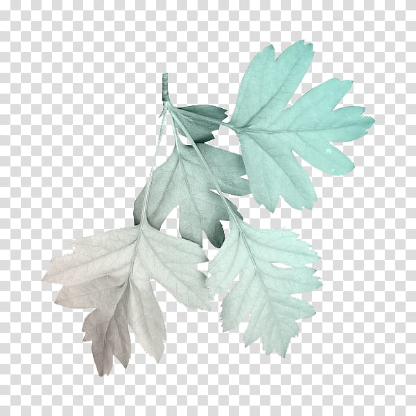 Green aesthetic, green plant leaf transparent background PNG.
