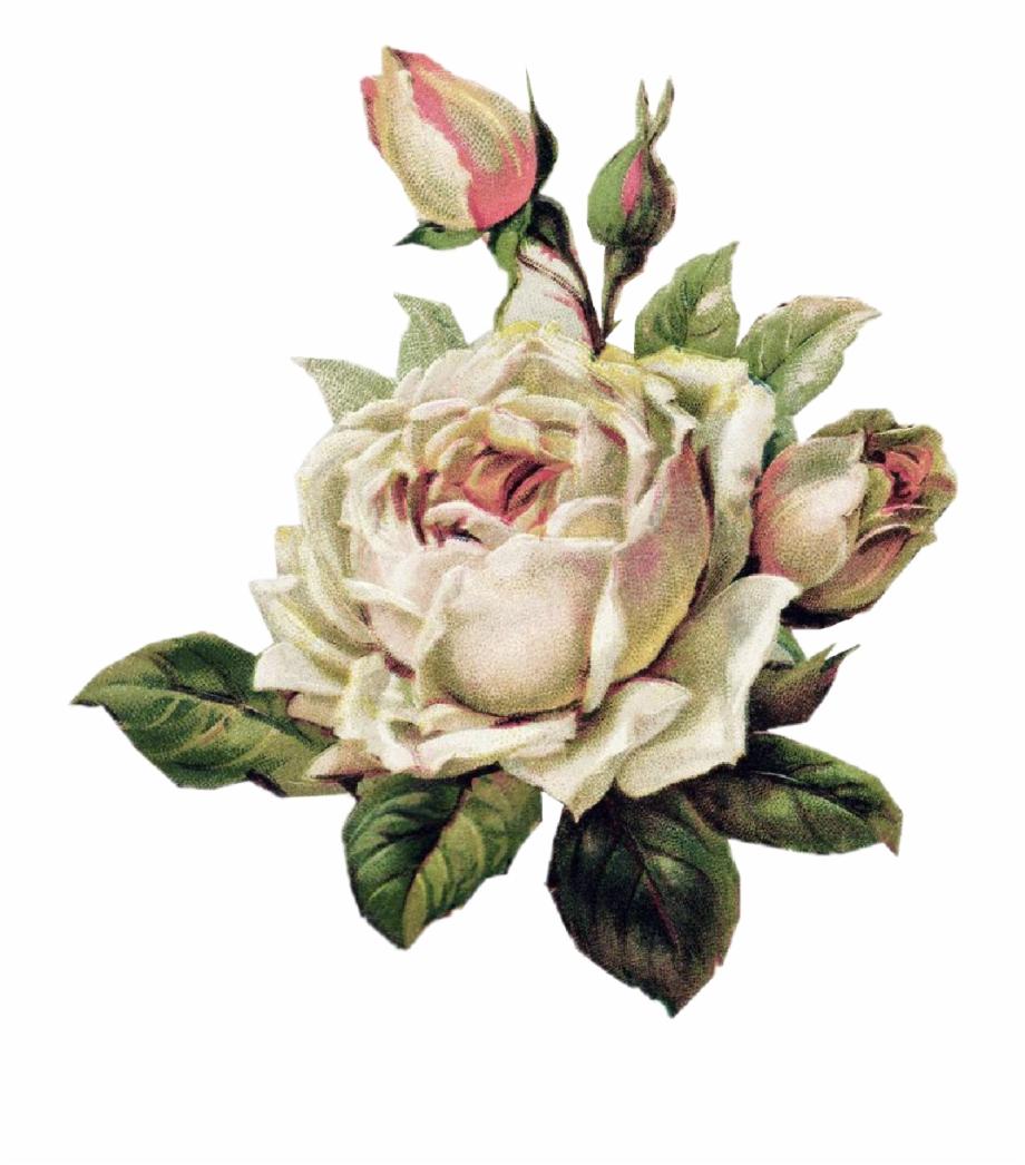 rosewhite #rosablanca #tumblr #aesthetic #png #draw.