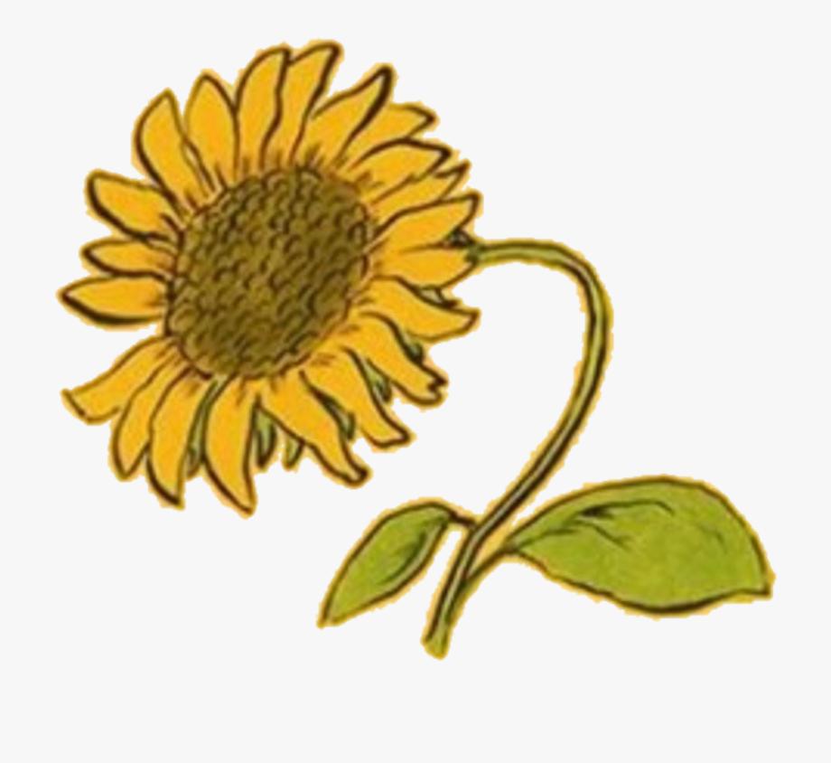 Sunflower Clipart Aesthetic.