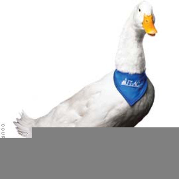 Aflac Duck Clipart Free.
