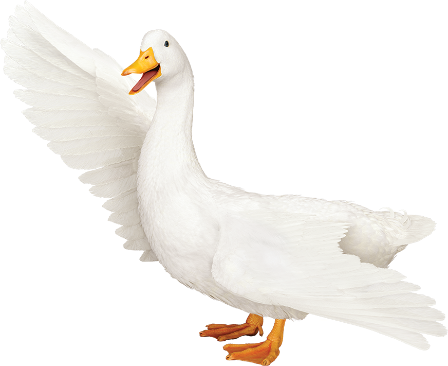 Aflac Duck Png ,HD PNG . (+) Pictures.