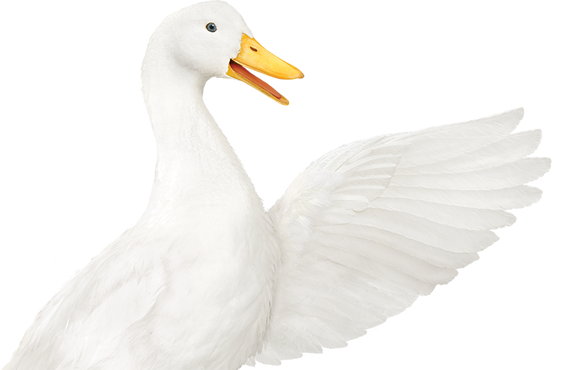 Aflac.
