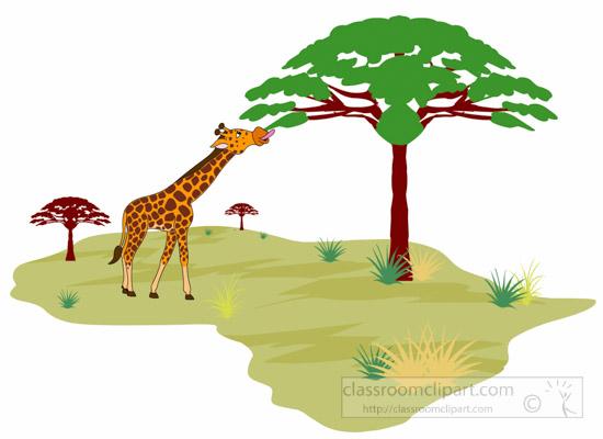 Africa : giraffe.